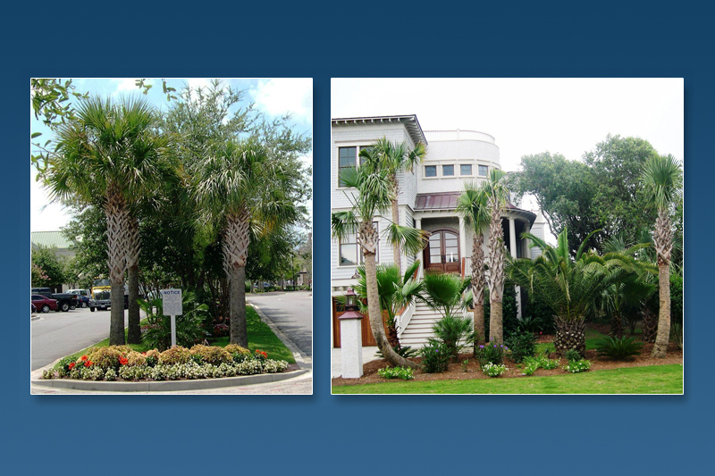 Charleston Landscape Design