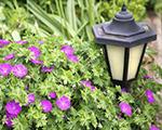 Outdoor Lighting for your Charleston Garden