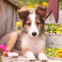 Pet Safety in Charleston Gardens
